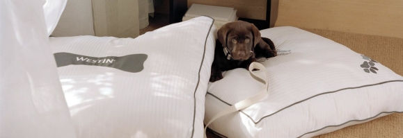 Dogs Are Welcome At Our Pet Friendly Portland Hotel